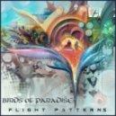 Birds of Paradise - Focal Point (Original mix)