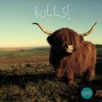 AT DAWN WE RAGE & CAPTAIN PANIC! - Bulls! (Original Mix)