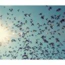 Paul Kalkbrenner - Aaron  (Tom & Jerry\'s Birds Flying High Edit)